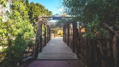 Bioparc Bridge