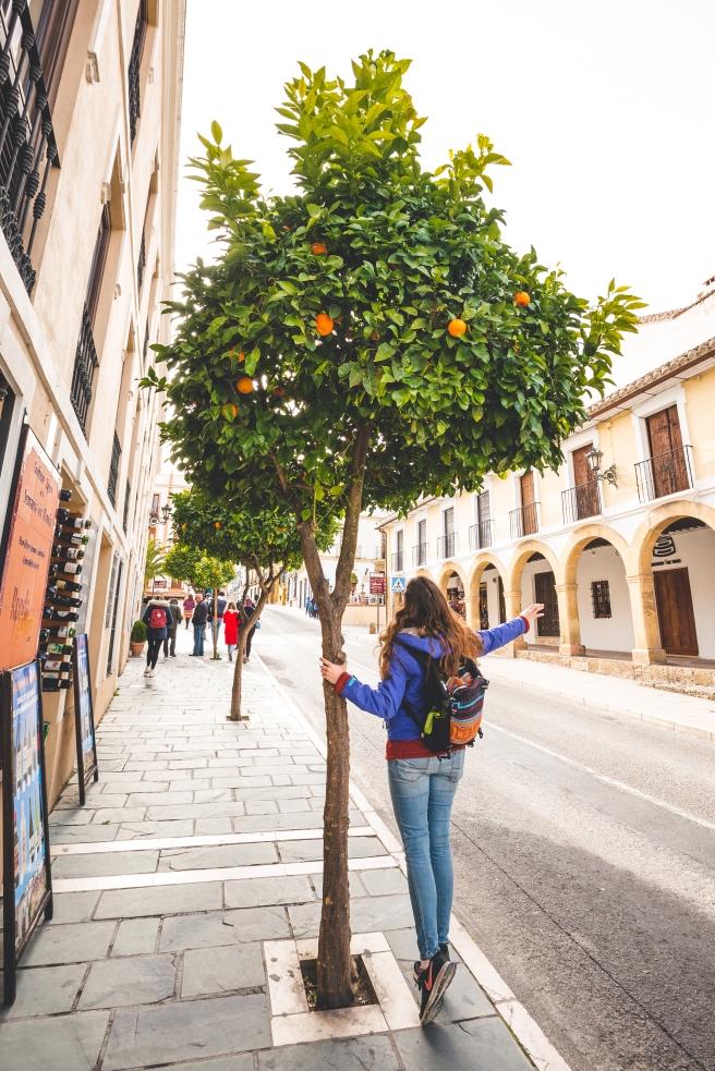 Flora loving the orange trees in Ronda.