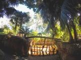 Lemur Bridge