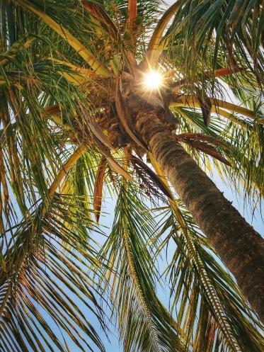 Beach Sun Flare